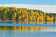 Trees in autumn around a northen lake<br /> Prince Albert National Park<br /> Saskatchewan<br /> Canada