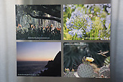 4 Photo Magnets of California landscape, sunset, nature, flowers, hummingbird, Malibu, ocean, Santa Monica, SoCal.