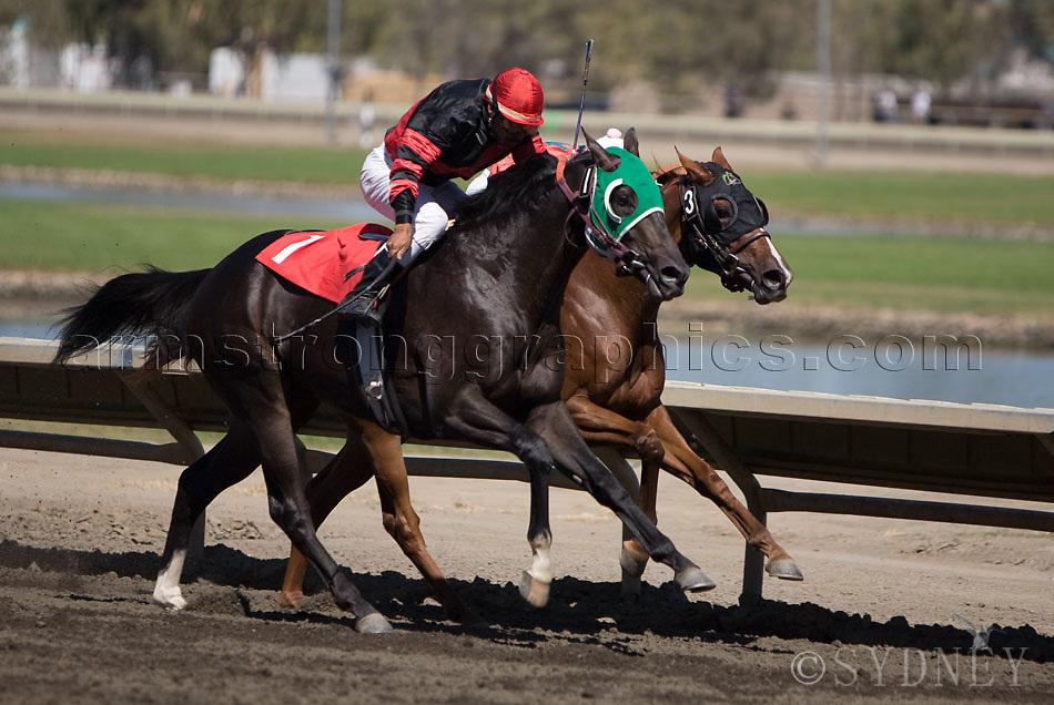 Horse racing duel