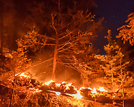 Burning log in the Cajete Fire lights up unburned mixed conifer forest, Jemez Mountains, © 2017 David A. Ponton