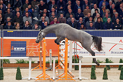 012, Kayne<br /> KWPN Stallionshow - 's Hertogenbosch 2018<br /> © Hippo Foto - Dirk Caremans<br /> 01/02/2018