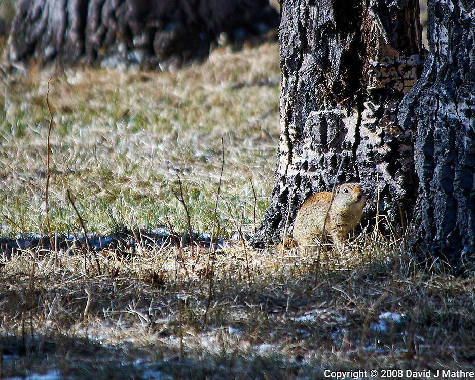 Marmot next to a tree at Lily lake in Rocky Mountain National Park. Image taken with a Nikon D300 camera and 80-400 mm VR lens (ISO 200, 400 mm, f/5.6, 1/800 sec).