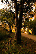 Golden  Gate Park, Stow Lake 2:55 am..photo by Jason Doiy.2-11-06