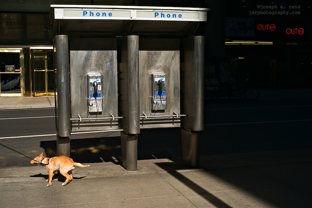Dog being pulled past phone booth