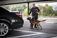 COMO, ITALY - 25 October 2013: A drug-sniffiing dog of Italy's Guardia di Finanza (Financial Police searches for drugs in the car of a man suspected of smuggling money and drugs across the border with Swizerland in Como, Italy, at the border with Chiasso (Switzerland) on October 25th 2013. Cash dogs are sniffer dogs that have specially trained to detect the ink on currency notes. In the effort of cracking down on tax evasion and cash smuggling, the Guardia di Finanza works with highly trained dogs in outposts along its borders with Switzerland and France, and in international airports such as Rome Fiumicino and Milano Malpensa.<br /> <br /> In Italy, the law allows to travel with up to 10,000 euros in cash. Beyond that, one must declare to the authorities.<br /> <br /> In 2012, the Guardia di Finanza of the  borders with Chiasso in Switzerland have intercepted more than 55 million euros not declared. In 2013, until September 31st, they have intercepted more than 92 million euros.  The Guardia di Finanza of the Chiasso outpost has been using cash dogs since 2010.