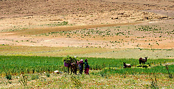Women working in fields in southern Morocco<br /> <br /> (c) Andrew Wilson | Edinburgh Elite media