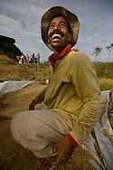 Keutapang Village near Banda Aceh - Aceh, Indonesia  Nov. 2008. A farmer harvesting and processing rice. (Heifer program in community)