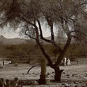 Graves under a tree in the Congress Cemetery, Congress, AZ