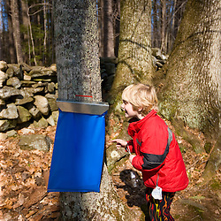 A boy (age 5) checks out a plastic sap bucket at Folsom's Sugar House in Chester, New Hampshire.