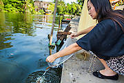 """03 JANUARY 2013 - BANGKOK, THAILAND: A woman """"makes merit"""" by releasing fish into Phra Khanong canal near Wat Mahabut. Just a few minutes from downtown Bangkok, the neighborhoods around Wat Mahabut interlaced with canals, still resemble the Bangkok of 60 years ago. Wat Mahabut is a large temple off Sukhumvit Soi 77. The temple is the site of many shrines to Thai ghosts. Many fortune tellers also work on the temple's grounds.   PHOTO BY JACK KURTZ"""