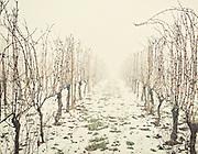 Vista Winery in winter