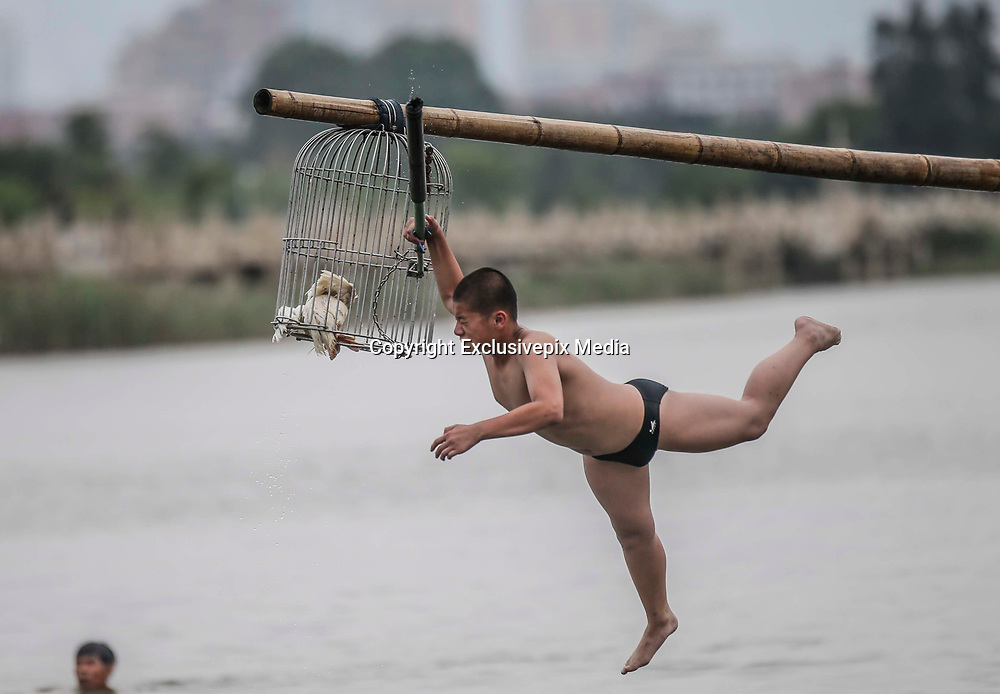 Duck-catching in China<br /> <br /> A competitor tries to slap the pole before catching ducks during a folk activity in celebration of the Dragon Boat Festival on May 30, 2017 in Quanzhou, Fujian Province of China. To catch ducks, competitors need to walk on a elevated bamboo and then slap the pole to let the ducks out before they falling into the water. After completing the above action, the competitors may succeed if they catch ducks in the water eventually. &copy;Exclusivepix Media