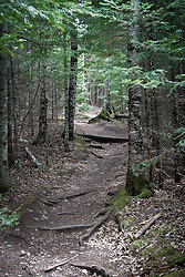 Superior hiking trail through Tettegouche State Park