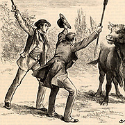 Johnny Eames helping Lord de Guest escape from the angry bull.  Illustration of 1883 by Gordon Frederick Browne (1858-1932) for 'The Small House at Allington' by Anthony Trollope, first published in 1862, the fifth in his series of Barsetshire novels.