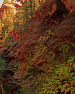 Colorful scene along the creek - Oak Creek Canyon, AZ