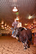 Ranch Sorting, Circle L Arena, Bozeman, Montana
