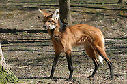 12: MISCELLANY WILD CANID CENTER
