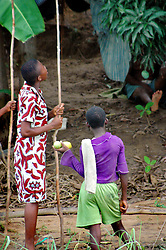 Ghana, Adaklu, Titikope, 2007. Children begin harvesting early-ripening mangos among the hundreds of trees that line the Volta River.
