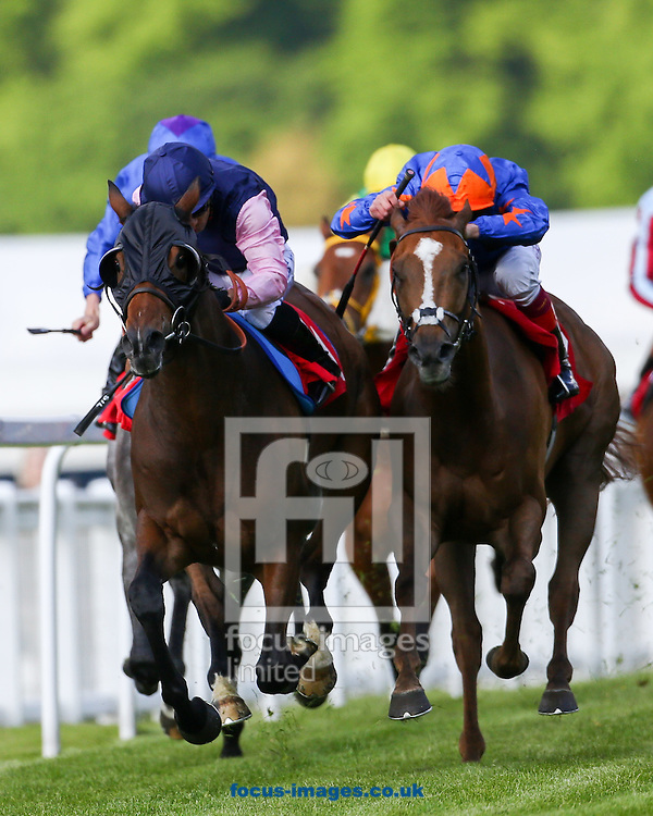 Favourite Inniscastle Lad ridden by Silvestre De Sousa (Dark Blue, Pink sleeves) wins the Marbank Construction Handicap from second favourite Frankie Dettori on Bridge Of Sighs (Royal blue, orange stars) during the Brigadier Gerard  meeting at Sandown Park, Esher. UK<br /> Picture by Mark Chappell/Focus Images Ltd +44 77927 63340<br /> 26/05/2016