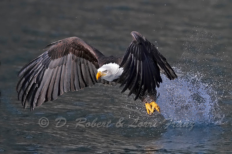 "Photographs from the ""Bald Eagles of Alaska"" photo tour"