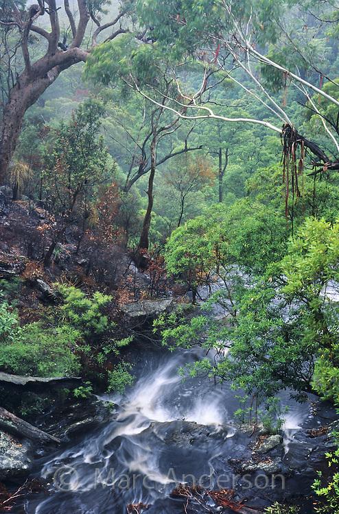 Flowing creek in a rainforest, Royal National Park, Australia.