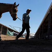 USA, New Mexico, Albuquerque, Trainer walks horse back to paddocks after race at The Downs at Albuquerque race track