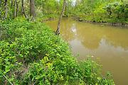 Forest along the Seine River<br /> Winnipeg<br /> Manitoba<br /> Canada