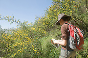 Israel, Upper Galilee, Iyyon River Nature reserve a female teen using a filed guidebook to name a plant. Spring March 2008