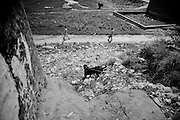 """A gull-ter dog walks out of his hut in the countryside. The 3 years old dog will die from here to few weeks, because the bad conditions of care. Suburbs in Rawalpindi, Pakistan, on thursday, August 28 2008.....According to the Islamic tradition, angels do not enter a house which contains dogs. Even if they are considered """"ritually unclean"""" by the jurists, the fighting dogs of Pakistan are tolerated by institutions and by believers alike. These mastiffs are grown and trained explicitly for these matches. Spectators in this area flock-in from nearby villages whenever a famous dog is scheduled to enter the arena. And this is more than just a show: entire families base their social esteem on the results of such bloody confrontations."""