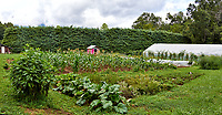 Vegetable garden at Arthur Morgan School near Burnsville, North Carolina. Composite of 4 mages taken with a Leica T camera and 35 mm f/1.4 lens.