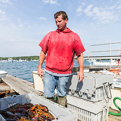 "Ernie Wallace, captain of ""Reel Catch"", weighs a portion of the day's catch at the Friendship Lobster Co-op in Friendship, Maine."
