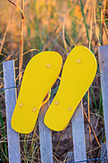 Yellow flip-flops hung on a sand fence waiting for the beachcomber to return.