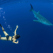 Whale shark (Rhincodon typus) with Spanish tourist and guide from the tour banca boat, Honda Bay, Palawan, the Philppines.