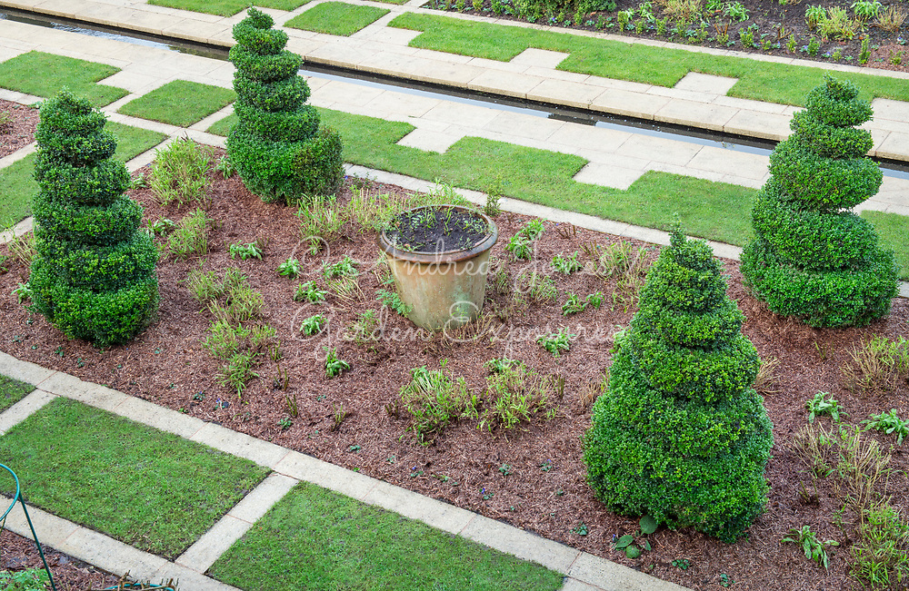 Formal garden in winter with paving, rill, lawn, and newly mulched border including Ilex crenata spiral topiary, container, and pruned perennials<br /> <br /> Private garden, Lancaster, Lancashire, England