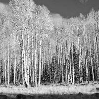 Black and White Fine Art Prints