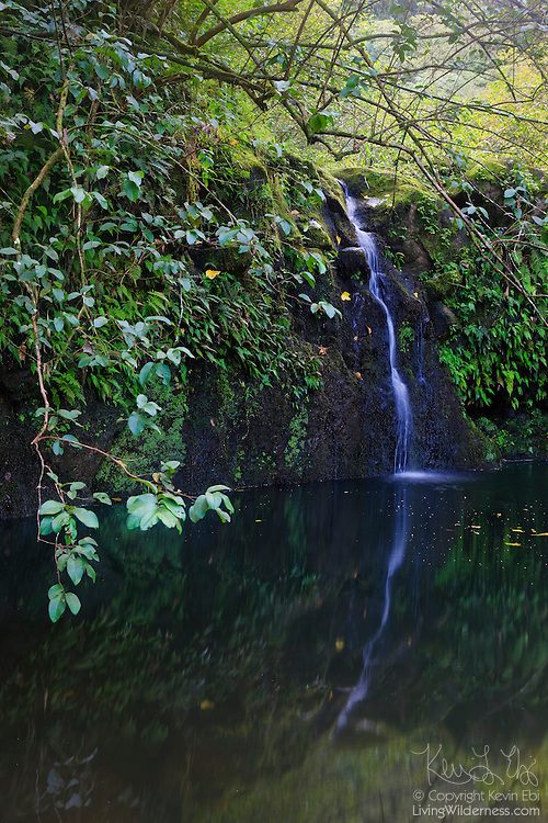 The scenic Haipua'ena Falls is reflected into a small pond at its base. Haipua'ena Falls is one of many waterfalls located along the Road to Hana in Maui, Hawaii.