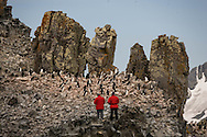 Antarctica. Chinstrap penguin and tourists  Half moon island - shetlands archipelago, Antarctica  Pygoscelis antarcticus  Forster / manchots a jugulaire et touristes  Half moon island - Shetlands archipel, Antarctica   TAR009