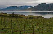 Sunrise over Lake Breeze vineyards, Naramata Bench, Penticton, Okanagan, British Columbia, Canada