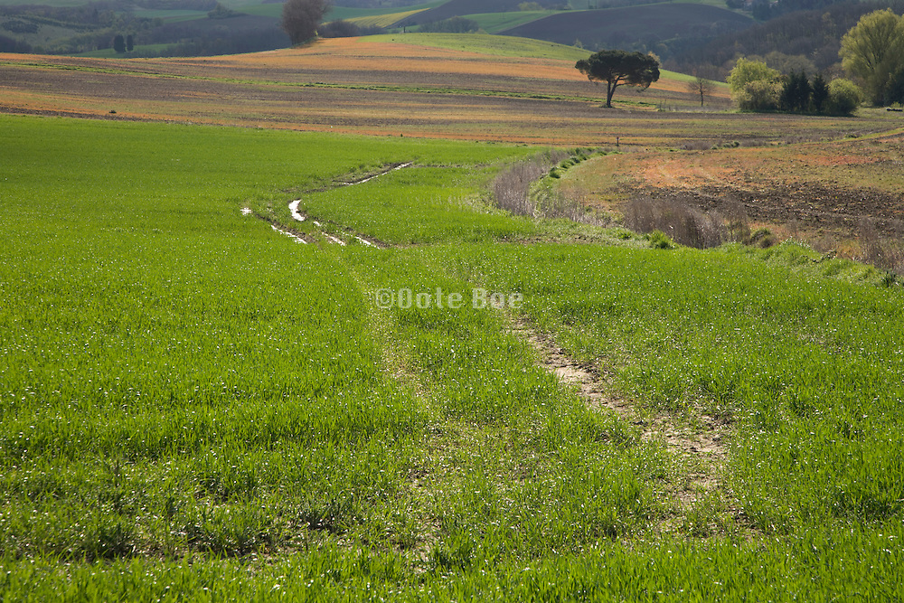 patch of a fresh green agricultural field during early spring season