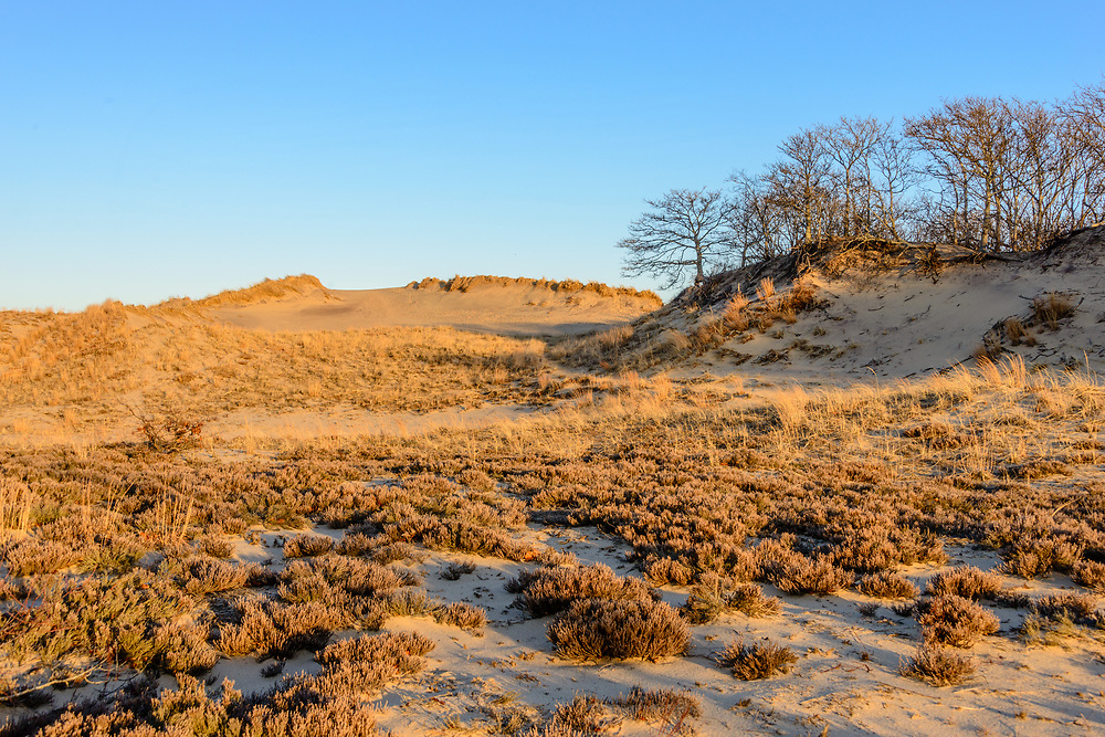 The Walking Dunes, Hither Hills State Park, Montauk, LI, NY