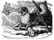 Dog from the Hospice of St Bernard finding a traveller in the snow.  Named for Bernard of Menthon (fl 1081) who built two mountain rest houses in the Alps.  Wood engraving c1840