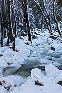A creek flows through a snow covered forest, Yosemite National Park, CA.