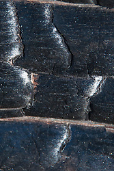 Burned Bark Detail, Plaskett Ridge, Los Padres National Forest, Big Sur, California, US
