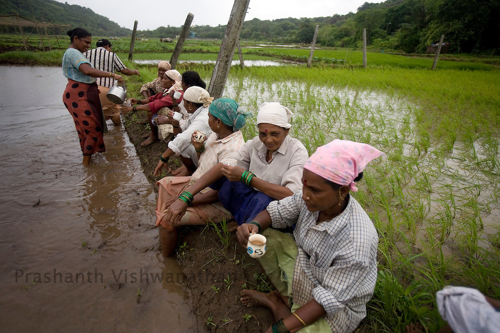 Rice farm workers have a tea break on a rice field in the outskirts of Mumbai, India, on Saturday, July. 12,2008. Photographer:  Prashanth Vishwanathan/Bloomberg News