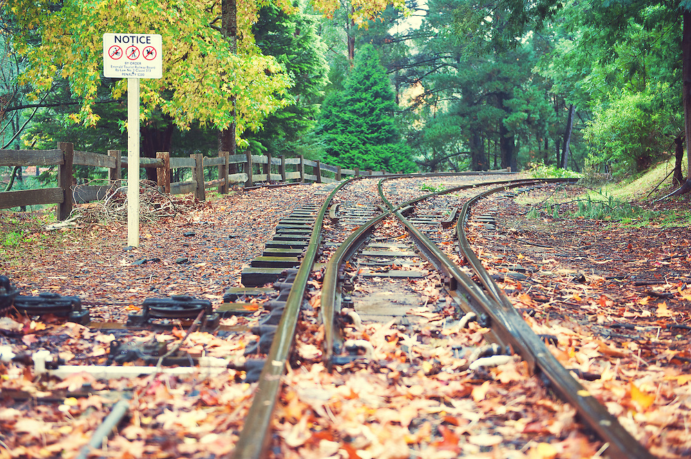 Puffing Billy Railway Track in Autumn