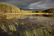 Stormy light over bog lochan, Glenfeshie, Scotland.