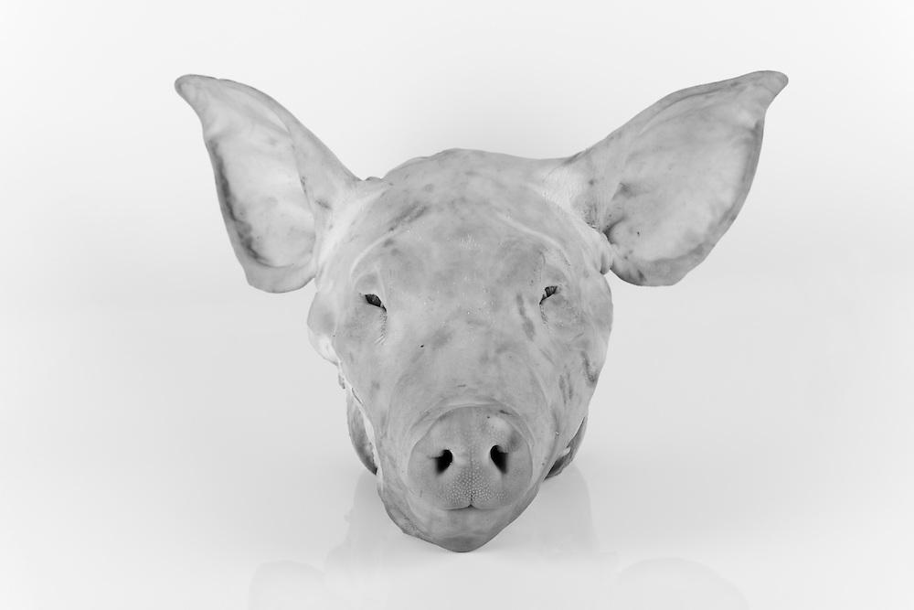 Animal Deconstruction Project