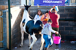 © Licensed to London News Pictures. 23/07/2017. Llanelwedd, UK. Contestants have some fun washing down 'Duke' a black & white stallion on the eve of the Royal Welsh Show. The Royal Welsh Agricultural Show is hailed as the largest & most prestigious event of its kind in Europe. In excess of 200,000 visitors are expected this week over the four day show period. The first ever show was at Aberystwyth in 1904 and attracted 442 livestock entries. Photo credit: Graham M. Lawrence/LNP