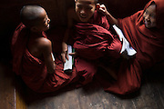 Three young Novice Monks playing around, one pulling ear, Nyaung Shwe
