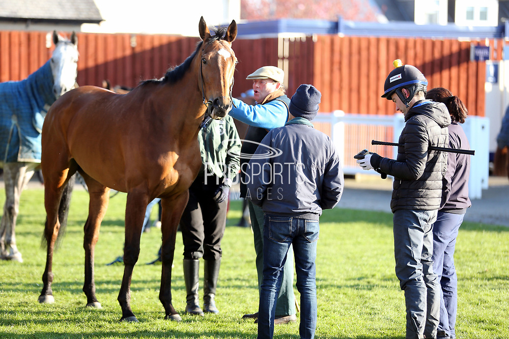 VERDANA BLUE one of the early favourites for the Scottish Champion Hurdle having an early morning inspection by his trainer Nicky Henderson prior to  the Scottish Grand National race day at Ayr Racecourse, Ayr, Scotland on 13 April 2019.